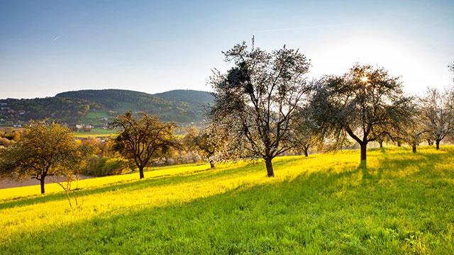 Frühling im Hartbergerland